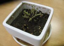 [XaCARブログ] エコ便りその3 植物は簡単には育たない、という教訓