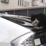 【カワイイけれど深刻被害も】猫から愛車を守る方法とは?